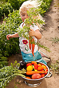 Anna Bell, age three, showing off just harvested produce  from her family's fields at Bell Organic Gardens in Sandy Utah.