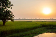 Sunrise and morning mist over a paddy field on the 2nd of October 2018 in Satkhira District, Bangladesh. Satkhira is a district in southwestern Bangladesh and is part of Khulna Division. It lies along the border with West Bengal, India. It is on the bank of the Arpangachhia River.