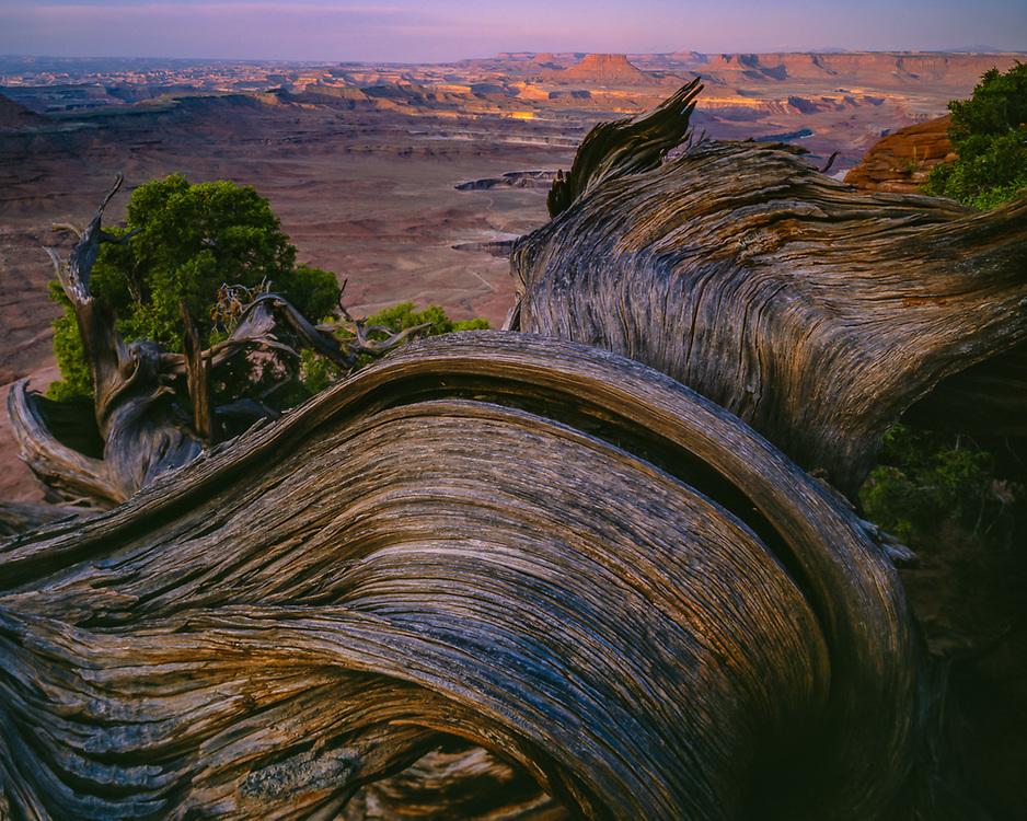 Canyon overlook, Canyonlands National Park, Utah, USA