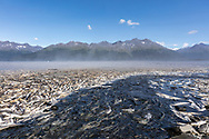 Spawning Silver and Pink Salmon stranded by low tide lie rotting along a creek in Valdez in Southcentral Alaska. Summer. Morning.