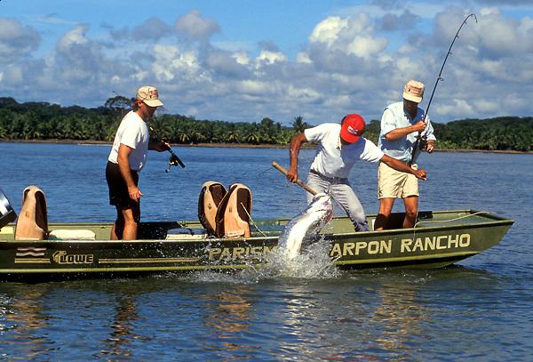 Stock photo of men tarpon (Megalops atlanticus) fishing in Parismina, Costa Rica
