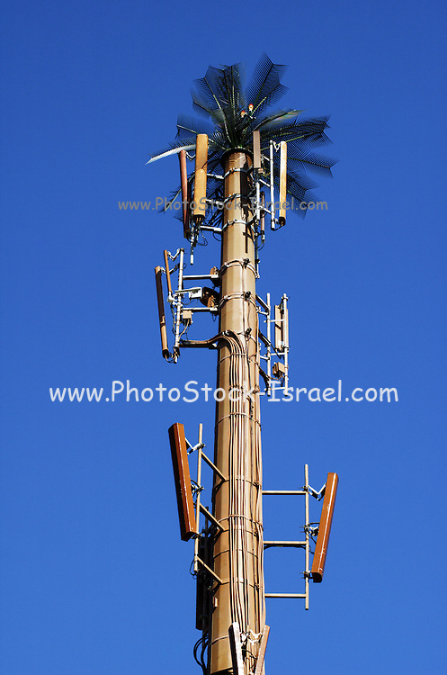 A cellular antenna disguised as a palm tree, Tel Aviv, Israel