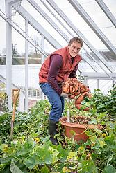 Tom Brown harvesting container grown Sweet Potato 'Beauregard' - Ipomoea batatas