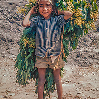 Villagers bring haul leaves from the forest to feed their animals, a major fuel of Nepal's deforestation.
