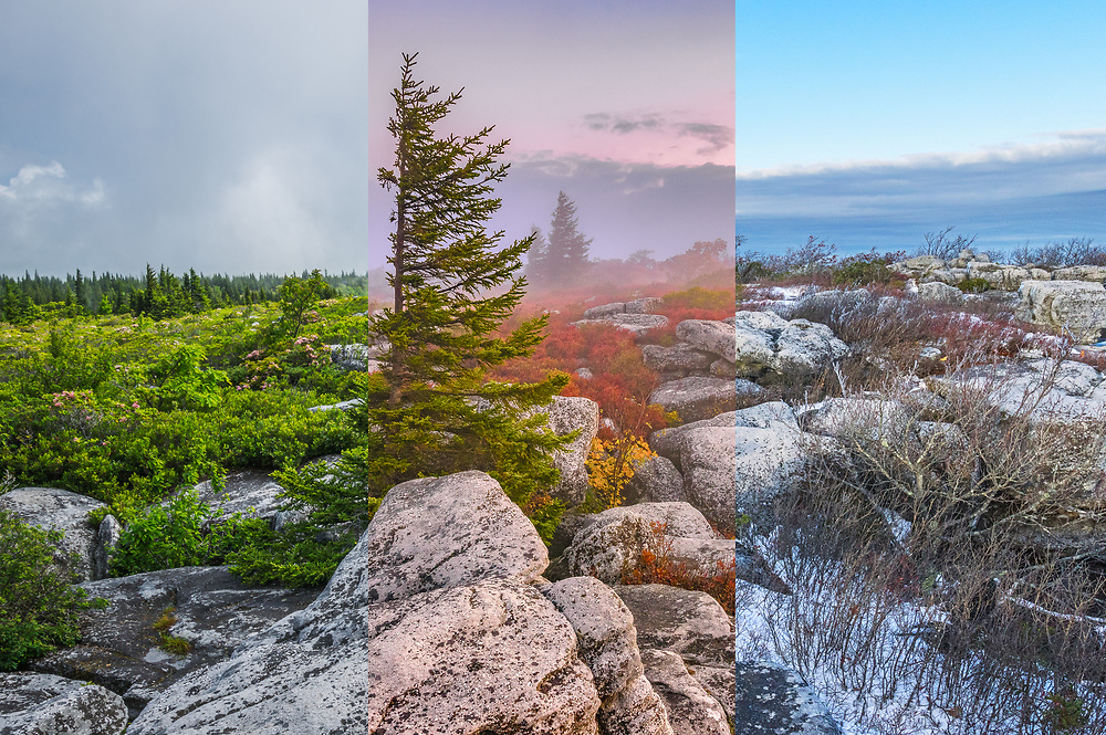 The changing seasons at Dolly Sods in West Virginia are represented side by side in this three panel mosaic.