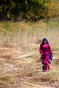 Indian woman agricultural worker at farm at Sawai Madhopur near Ranthambore in Rajasthan, Northern India