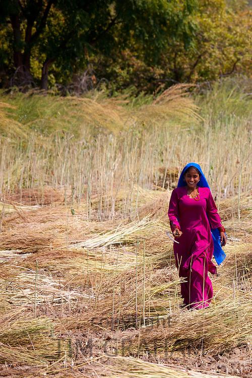 Indian woman agricultural worker at farm at Sawai Madhopur near Ranthambore in Rajasthan, Northern India
