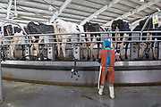 Cows being milked on a circular machine at Austasia's No. 3 dairy farm in Dongying, Shandong Province, China on 31 October, 2013. By the end of 2014, the pan-Asian diary group will have invested more than $US300 million in China and have around 55,000 cattle in its herd. The rapidly increasing dairy demand from China is pushing global prices higher, especially after food safety scandals have wrecked consumer confidence in local Chinese producers, spelling ample opportunity for global producers.