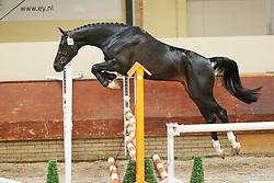 Believe Me<br /> KWPN Paardendagen 2009<br /> © Hippo Foto - Leanjo de Koster