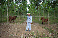 A farmer in the forest with his cattle pauses to look at the camera, Dong Nai Province, Vietnam, Southeast Asia