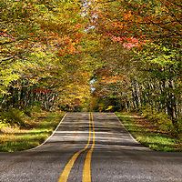 """""""Lineage""""<br /> <br /> A wonderful view through early autumn foliage along a rural Michigan road! <br /> <br /> Autumn Landscapes by Rachel Cohen"""