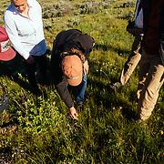 A Teton Teton Science Schools wildlife tour stops to explore the balsamroot flowers along the Antelope Flats Road in Grand Teton National Park, Wyoming.(Greg Peck, Matthew Bart, Sean Baker, Katie-Cloe Stock, Dawson-guide)