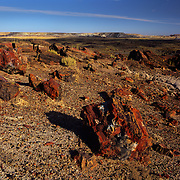Fragments of petrified trees in Petrified Forest National Park, AZ.