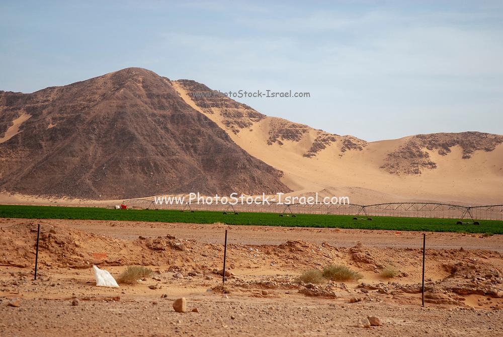 Desert agriculture farming in the desert. Photographed in Wadi Rum, Jordan in April