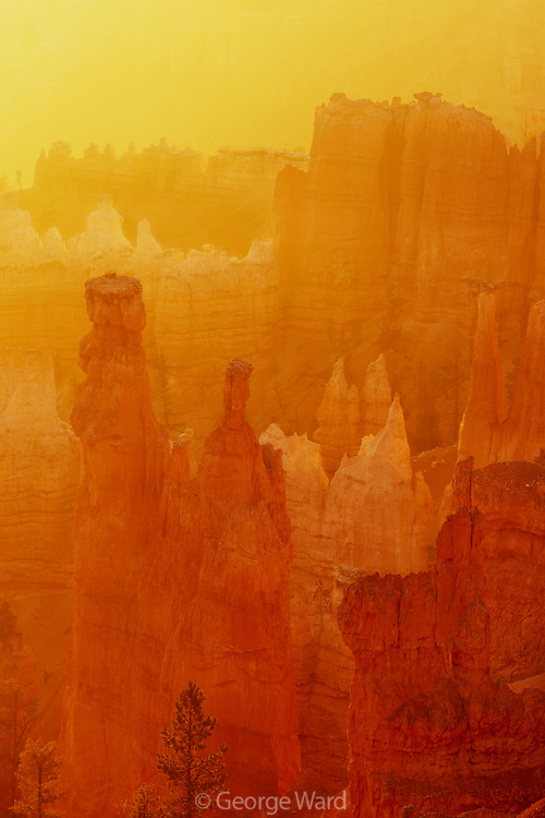 Dawn with Golden Light, Bryce Canyon National Park, Utah