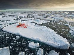 Polar bear (Ursus maritimus) in arctic ice landscape with a fresh seal kill, Nordaustlandet, Svalbard
