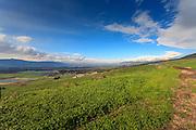 Israel, Golan Heights Landscape. Photographed in Nahal Orvim (Orvim Stream) Nature reserve
