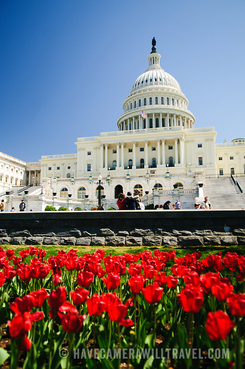 US Capitol Building with spring tulips and clear blue sky. Shallow depth of field with focus on the Capitol Dome.