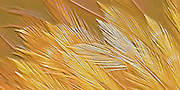 Abstract photographic art relief of feather design