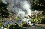 Steam rising from geo-thermal activity hot springs at Te Whakarewarewa Maori Village, Rotorua, New Zealand 1974