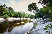 White Springs.Florida.Suwannee River.Stephen Foster State Park
