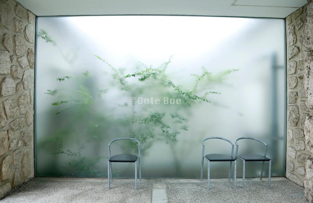 green garden plants seen through frosted glass