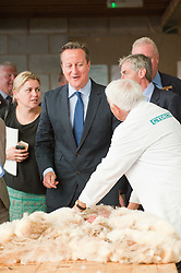 © Licensed to London News Pictures. 21/07/2014. Llanelwedd, UK. David Cameron visits the sheep-shearing shed at the show. A record numbers of visitors in excess of 240,000 are expected this week over the four day period of Europe's largest agricultural show. Livestock classes and special awards have attracted 8,000 plus entries, 670 more than last year. The first ever Royal Welsh Show was at Aberystwyth in 1904 and attracted 442 livestock entries. Photo credit: Graham M. Lawrence/LNP