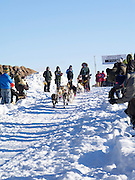Amber Evans of Milaca, MN sets off on her ten-dog class sled race on Sunday, 2 Feb 2014. Scenes from the Apostle Islands Sled Dog Race, hosted by the Bayfield Chamber of Commerce, near Bayfield, WI