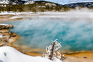 Sapphire Pool in winter.  Yellowstone in winter provides a landscape like no other.  This is an extremely hot, hot spring creating the brilliant color. The frost of the little tree was created by the steam coming off the water then freezing to the tree.