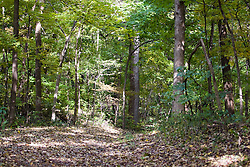 October 2009: A hiking trail through the woods in the fall at Mississippi Palisades State Park. Sights to see in and around Galena Illinois.