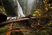 A waterfall pours into Boulder River, Mount Baker-Snoqualmie National Forest, Washington.