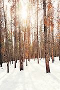 The sun breaks through the trees on the trail to Lily Pad Lake in Breckenridge, Colorado