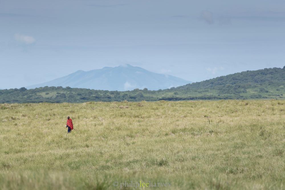 Distant view of a single man from the Masai tribe walking in a savannah, Ngorongoro Highlands, Tanzania