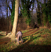 A01XCF Sequence of nine Man cutting down an ash tree in English woodland
