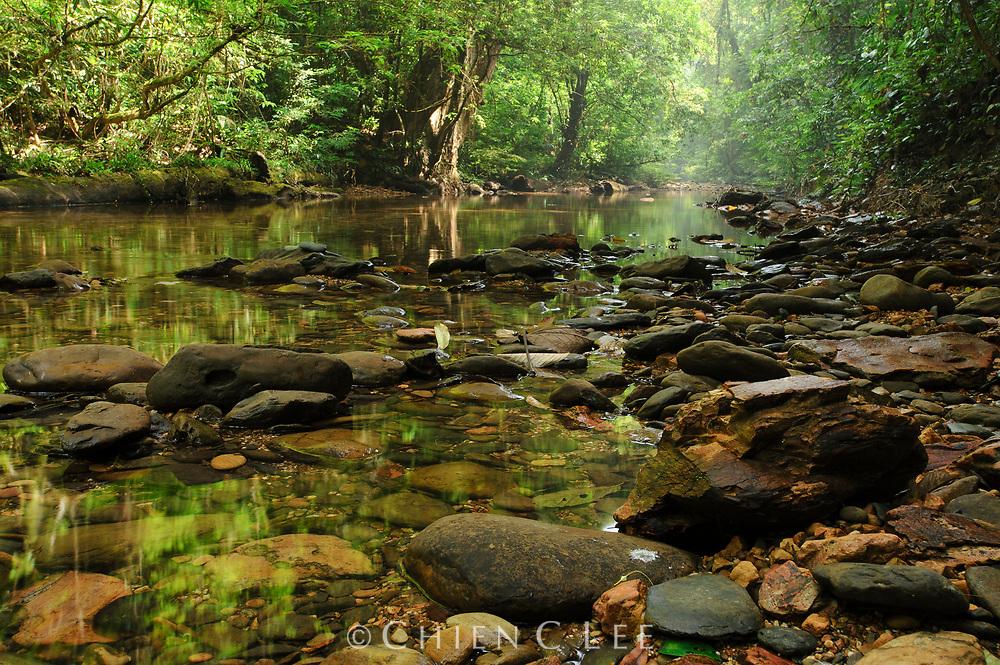 A stream through lowland rainforest. Mulu National Park, Sarawak (Borneo).