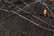An oak leaf resting on a dark rock with quartz veins running through it in Cave Creek Canyon, Chiricahuan Mountains, Southeastern Arizona