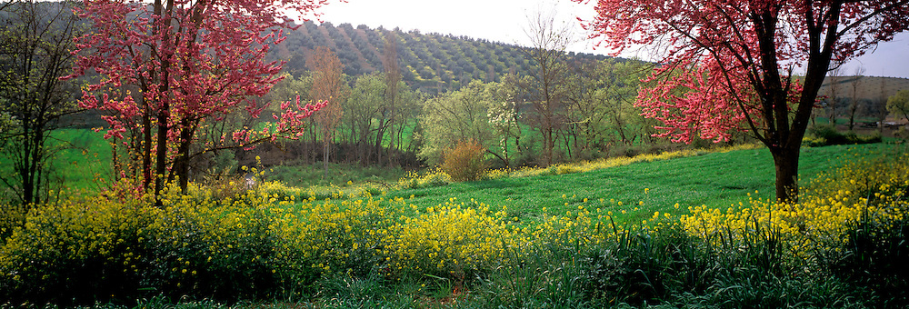 SPAIN, ANDALUSIA Wildflowers and trees in bloom in Sierra de Cazorla north of Granada