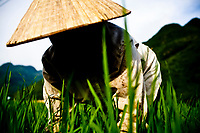 A farmer works her rice fields in the late afternoon in Mai Chau Village in northwestern Vietnam.