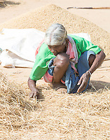 KHUNTI (Jharkhand) -  Rijstverwerking   COPYRIGHT KOEN SUYK