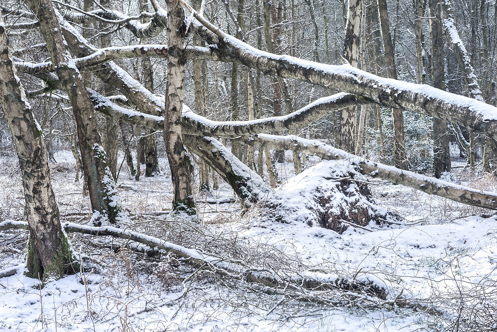 Couldn't have snow without a bit of messy woodland