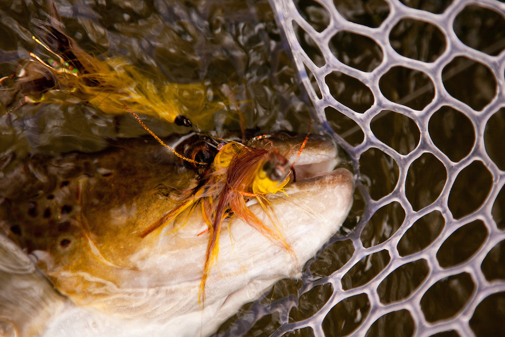 A netted brown trout hooked on a large streamer by Mike Schmidt of Angler's Choice Flies.