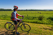 Cyclist and sheep in the Totara Valley, Canterbury, South Island, New Zealand