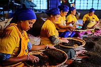 Inde, Bengale Occidental, Darjeeling, Jogmaya Tea Estates Factory // India, West Bengal, Darjeeling, Jogmaya Tea Estates Factory