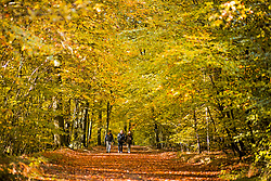 © Licensed to London News Pictures. 22/10/2020. Burnham, UK. Members of the public walk amongst the autumnal colours at Burnham Beeches national park and National Nature Reserve in Buckinghamshire, south East England. Photo credit: Ben Cawthra/LNP