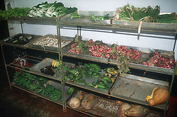 Shelves of vegetables for sale in shop of organic allotment or Organoponico in Havana; Cuba,