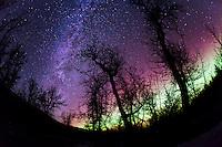 Milky Way and northern lights glow through bare cottonwood trees near Kodiak, Alaska