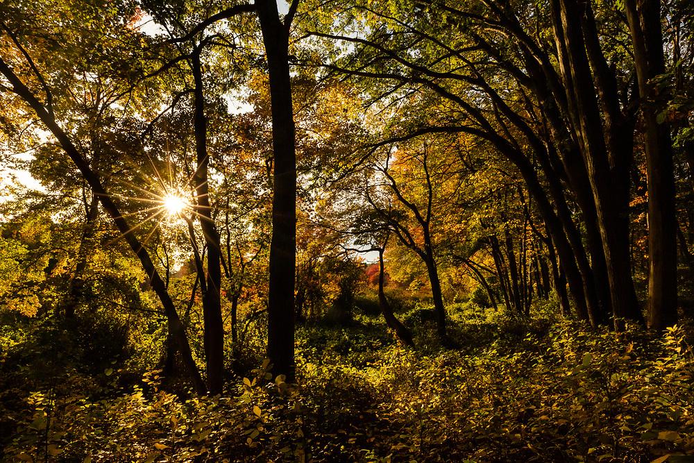 Autumn walk in Lexington, MA.