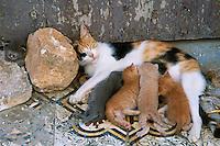 Maroc, Meknes, Chat dans la Medina // Morocco, Meknes, cats on the Medina