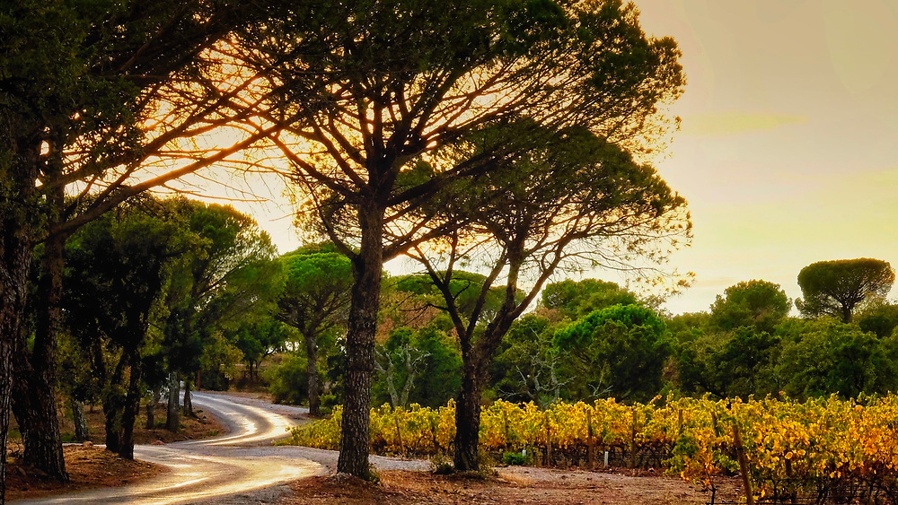 """North of Toulon in southern France is a landscape of parasol pines, vineyards, and olive groves.  For obvious reasons, I've titled this image, """"Ruban de Lumière"""" which translates from French to, """"Ribbon of Light"""" in English."""
