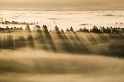 Foggy ridges at sunrise above Salmon Creek Watershed, near Occidental, California